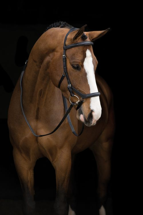 Rambo Micklem English Leather Deluxe Competition Bridle - Black