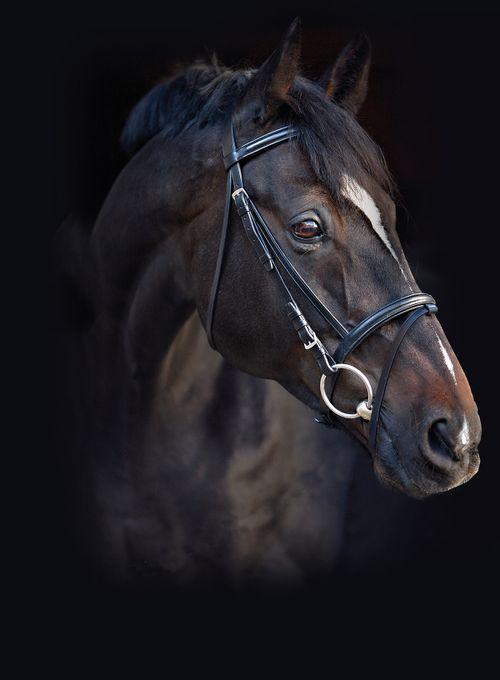 Amigo Leather Bridle - Black
